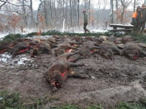 hunting in hungary 25